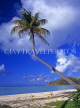 ANTIGUA, beach with leaning ccocnut tree, ANT699JPL