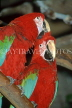 COSTA RICA, birdlife, red and green Macaws, CR86JPL