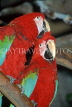 COSTA RICA, birdlife, red and green Macaws, CR86JPLA