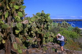 GALAPAGOS Islands, Prickly Pear Cactus trees, tourist photographing, GAL295JPL