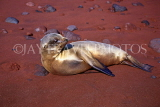 GALAPAGOS Islands, young Sea Lion, on red sand beach, GAL261JPL