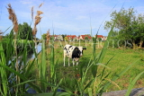 HOLLAND, Edam countryside, farmland, cow, HOL829JPL