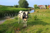 HOLLAND, Edam countryside, farmland, cow, HOL831JPL