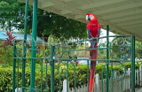 JAMAICA, Kingston, Hope Zoo, Macaw parrot, JM309JPL