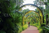 SINGAPORE, Botanic Gardens, Orchid Garden,  archway of Oncidium Orchids, IN1038JPL