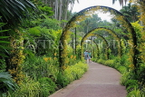 SINGAPORE, Botanic Gardens, Orchid Garden, archway of Oncidium Orchids, SIN1039JPL