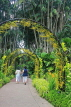 SINGAPORE, Botanic Gardens, Orchid Garden, archway of Oncidium Orchids, SIN1040JPL