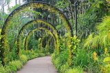 SINGAPORE, Botanic Gardens, Orchid Garden, archway of Oncidium Orchids, SIN1042JPL