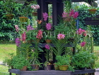 SINGAPORE, Botanical Gardens, Tropical Gardens, Spray Orchids, in pots, SIN397JPL