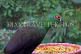 Taiwan, TAIPEI, Taipei Zoo, Bird World, Green Turaco, TAW315JPL