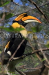 Taiwan, TAIPEI, Taipei Zoo, tropical rainforst, Great Indian Hornbill, TAW318JPL