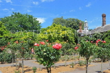 UK, LONDON, Holland Park, Rose Garden, UK29150JPL