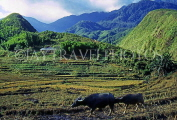 VIETNAM, Lao Cai province, Sapa, Hoang Lien mountain scenery and cultivated land, VT411JPL