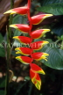 VIRGIN ISLANDS (British), Heliconia, (crab claw flowers), BVI1179JPL